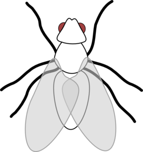 Fly clipart Clipart Images Clipart Art Clip