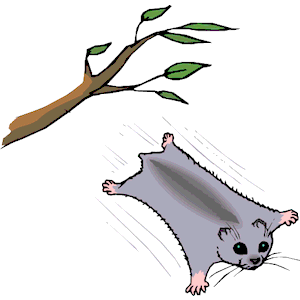 Flying Squirrel clipart (wmf download Squirrel clipart formats