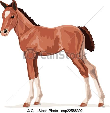 Foal clipart Brown Photos  and 10
