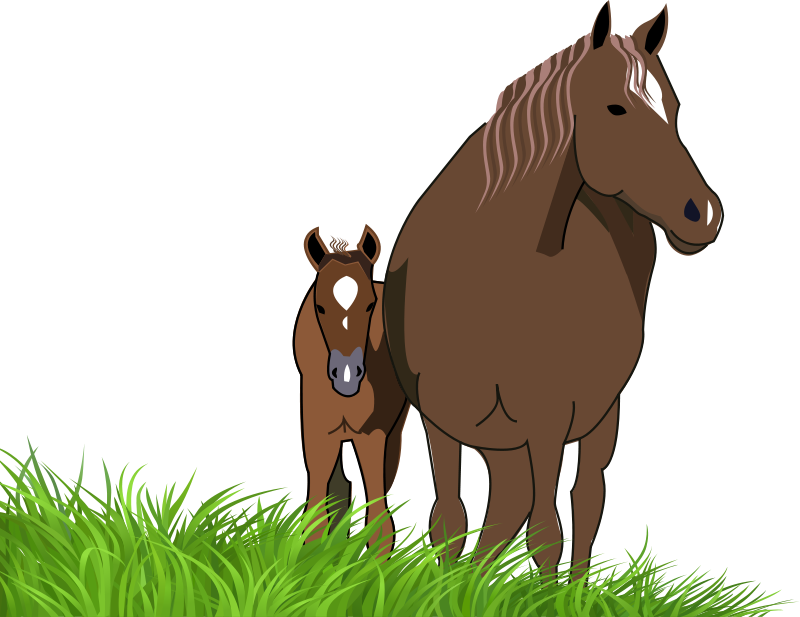 Foal clipart Mare Foal Clipart Foal And