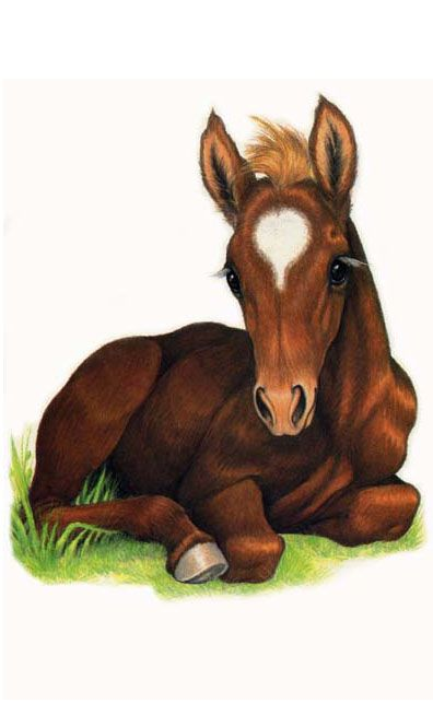 Brown clipart baby horse Find images on Art Pin