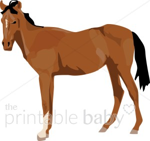 Brown clipart foal Foal ( for