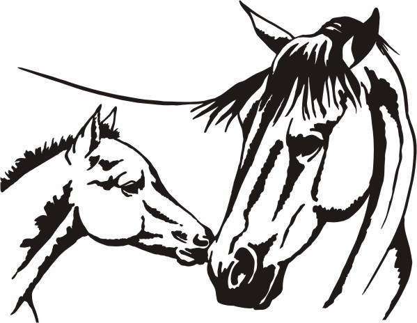 Head clipart quarter horse Baby more! Pictures and foal