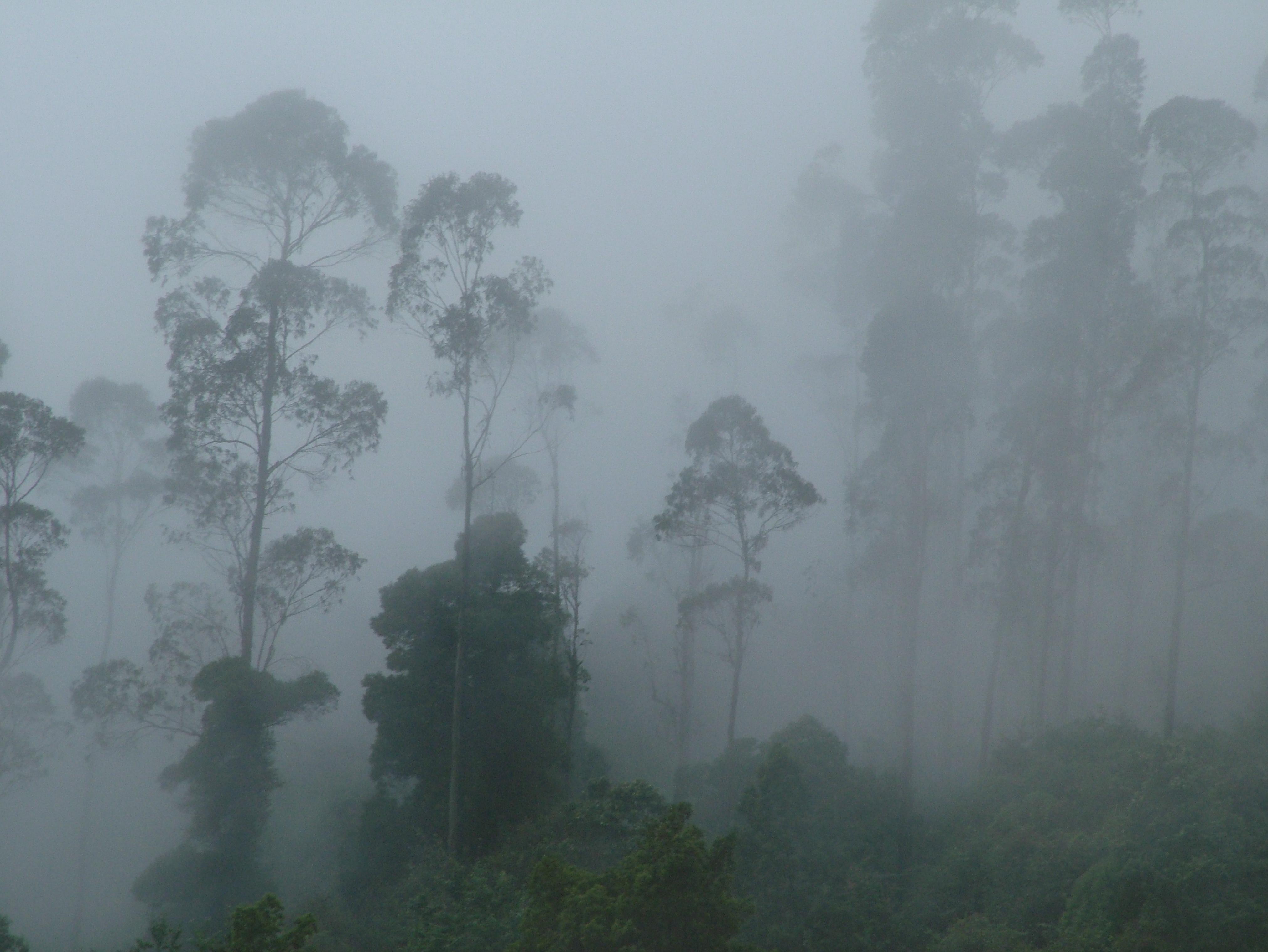 Mist clipart Fog Fog > Fog