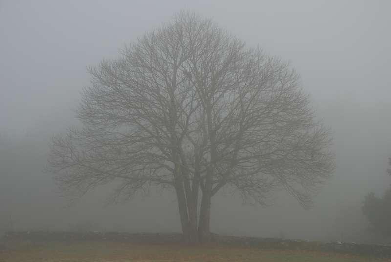 Fog clipart Clipart > Clipart Savoronmorehead Fog