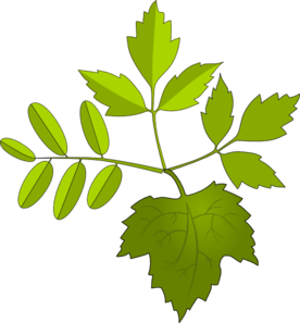 Foliage clipart At Clip clip royalty com