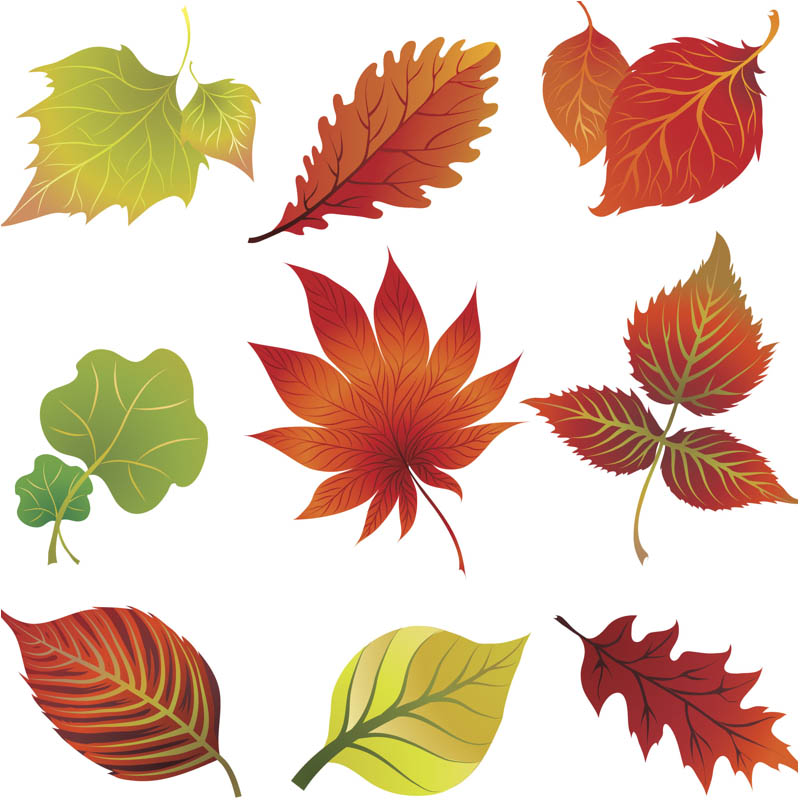 Leaves clipart autumn leaves Printable Free Leaves ClipartMe Foliage