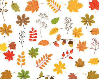 Gourd clipart fall leave Foliage clip art clipart leaf