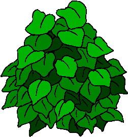 Foliage clipart Tree 20clipart clipart Clipart clipart