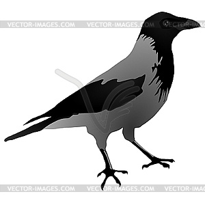 Crow clipart simple Crows best and ravens 148
