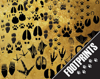Footprint clipart bare Footprint Footprint Animal Fingerprint cliparts