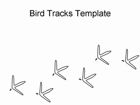Footprint clipart bird Template feet line jpg drawing