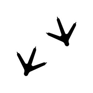 Footprint clipart bird Tracks birds Keywords: tracks animal