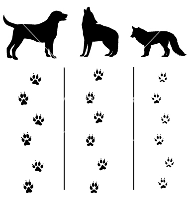 Wolf clipart dog tracks Vs tracks  coyote track