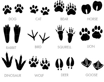 Footprint clipart goose Toppers for Crafts Art clipart