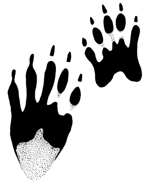 Footprint clipart raccoon Of Wildlife Fish Wildlife