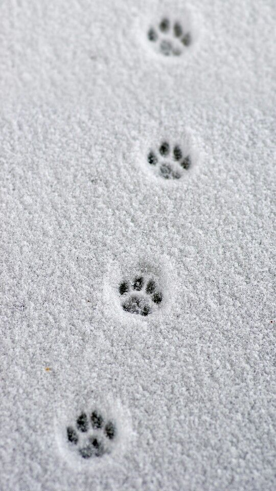 Footprint clipart road path Cat how on be careful