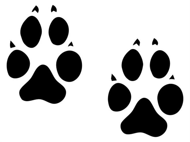 Wolf clipart dog tracks Footprints  Collection Clip 30+