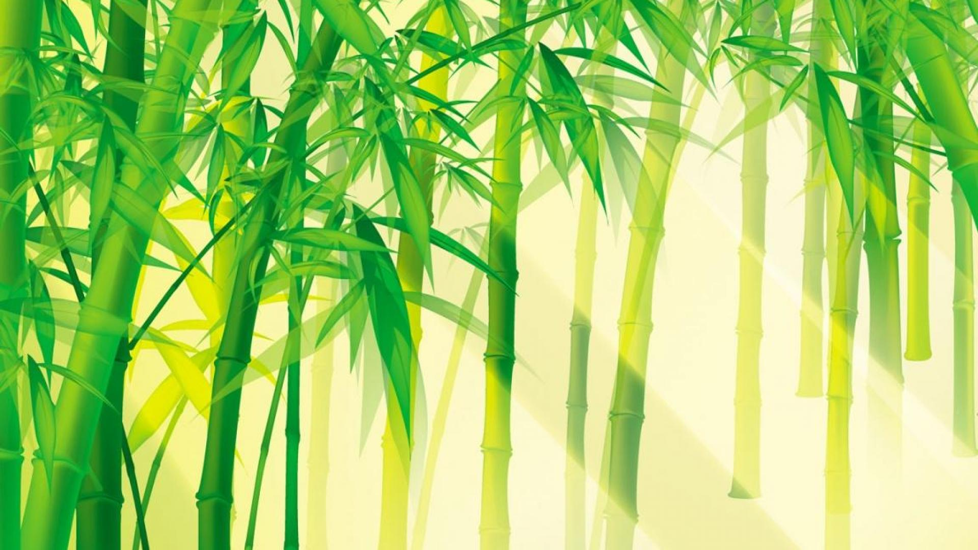 Forest clipart bamboo forest  Forest Bamboo Bamboo wallpaper