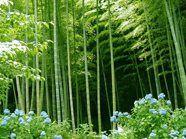 Forest clipart bamboo forest At online Forest Bamboo