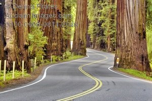 Forest clipart forest road Road through stock photography &