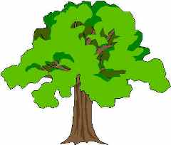 Tree clipart forest tree #6