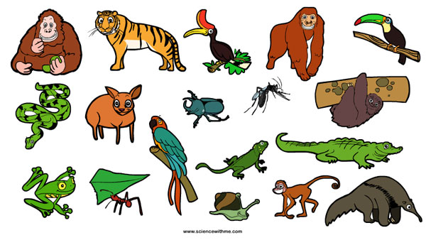 Forest clipart plants and animal Rainforest Animals rainforest_animals1 Learn about