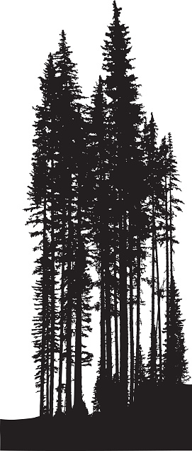 Pine Tree clipart dark forest More CC101 Trees Discover TREES