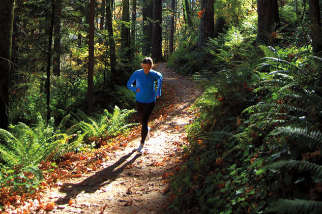Forest clipart forest road Guide: The Park Runs Best