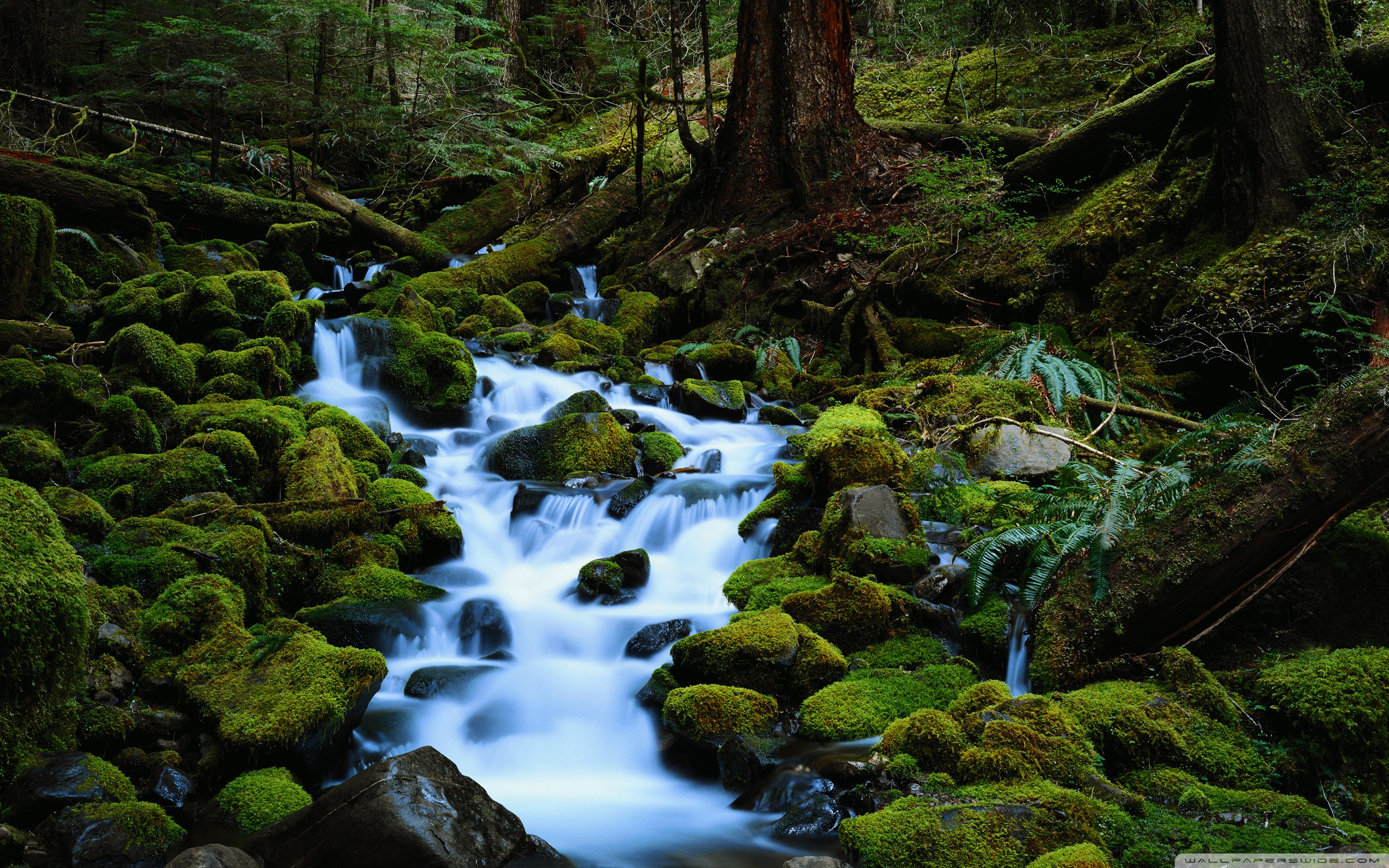 Forest clipart water stream Image clipart wallpaper a Mountain
