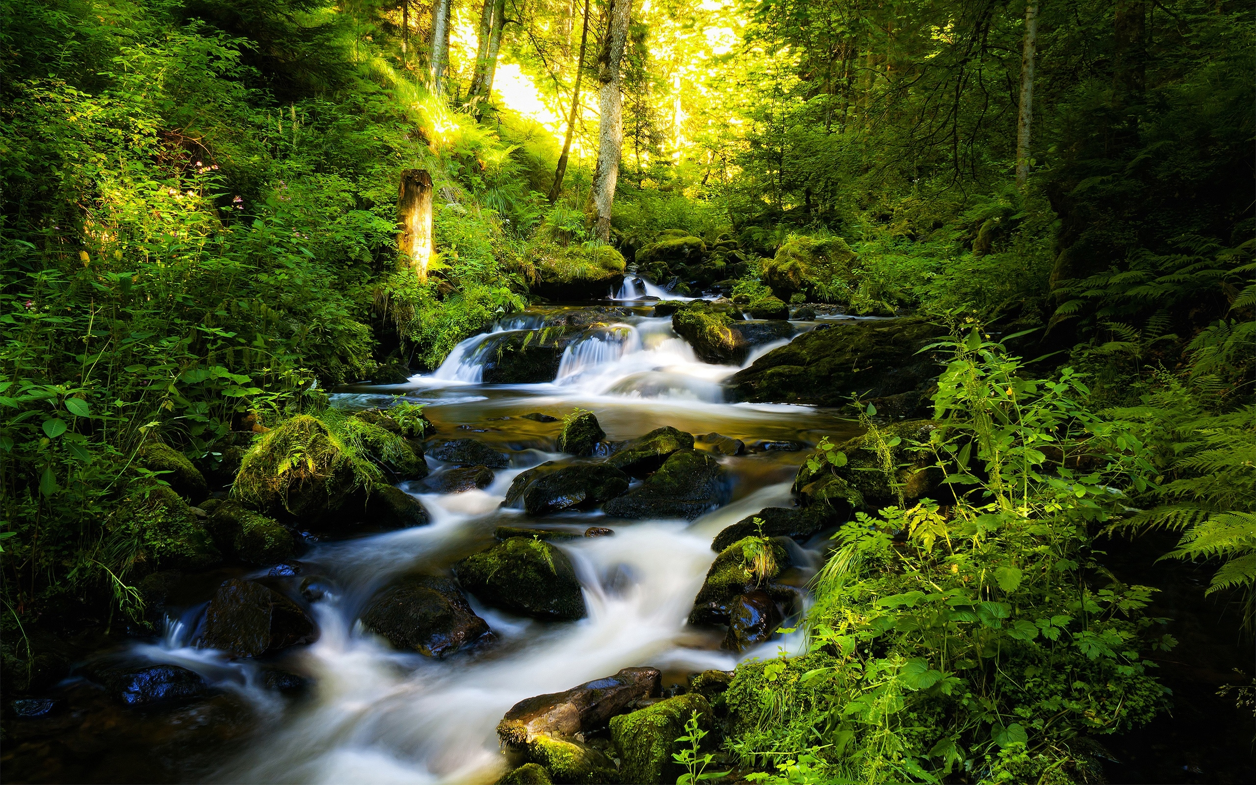 Forest clipart water stream Clipart photo wallpaper in Mountain