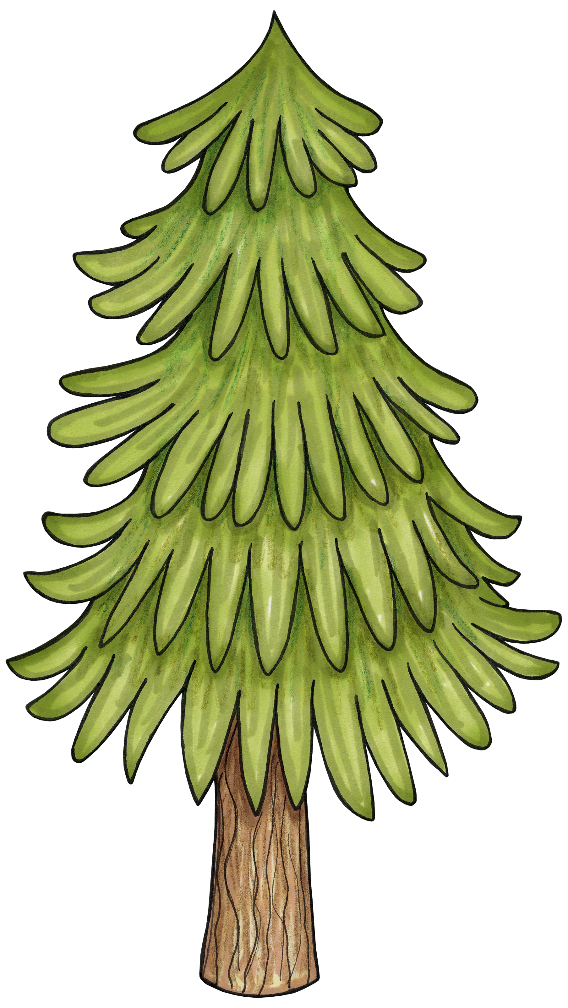 Tree clipart forest tree #15