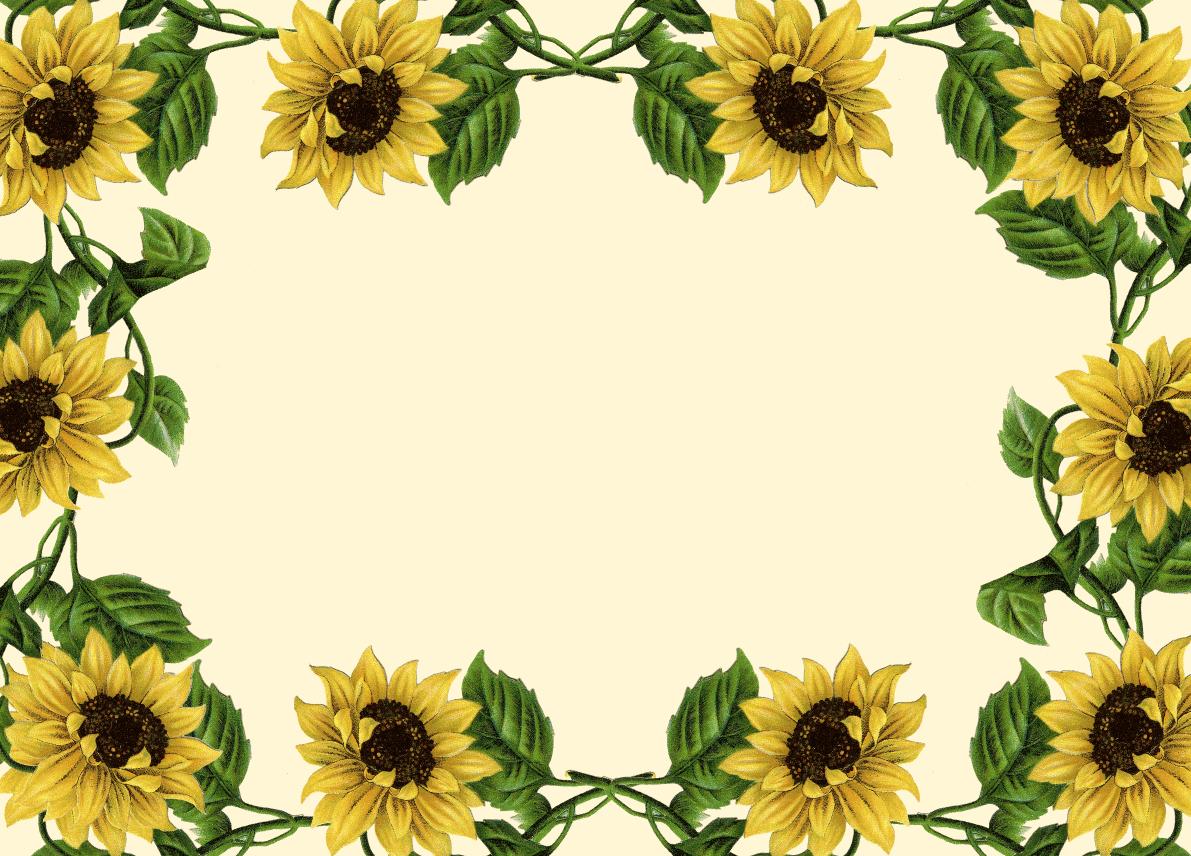 Wallpaper clipart sunflower For Clip Border Art Sunflower