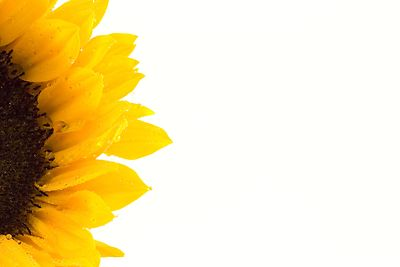 Frame clipart sunflower Stock Images Sunflower Photography Panda