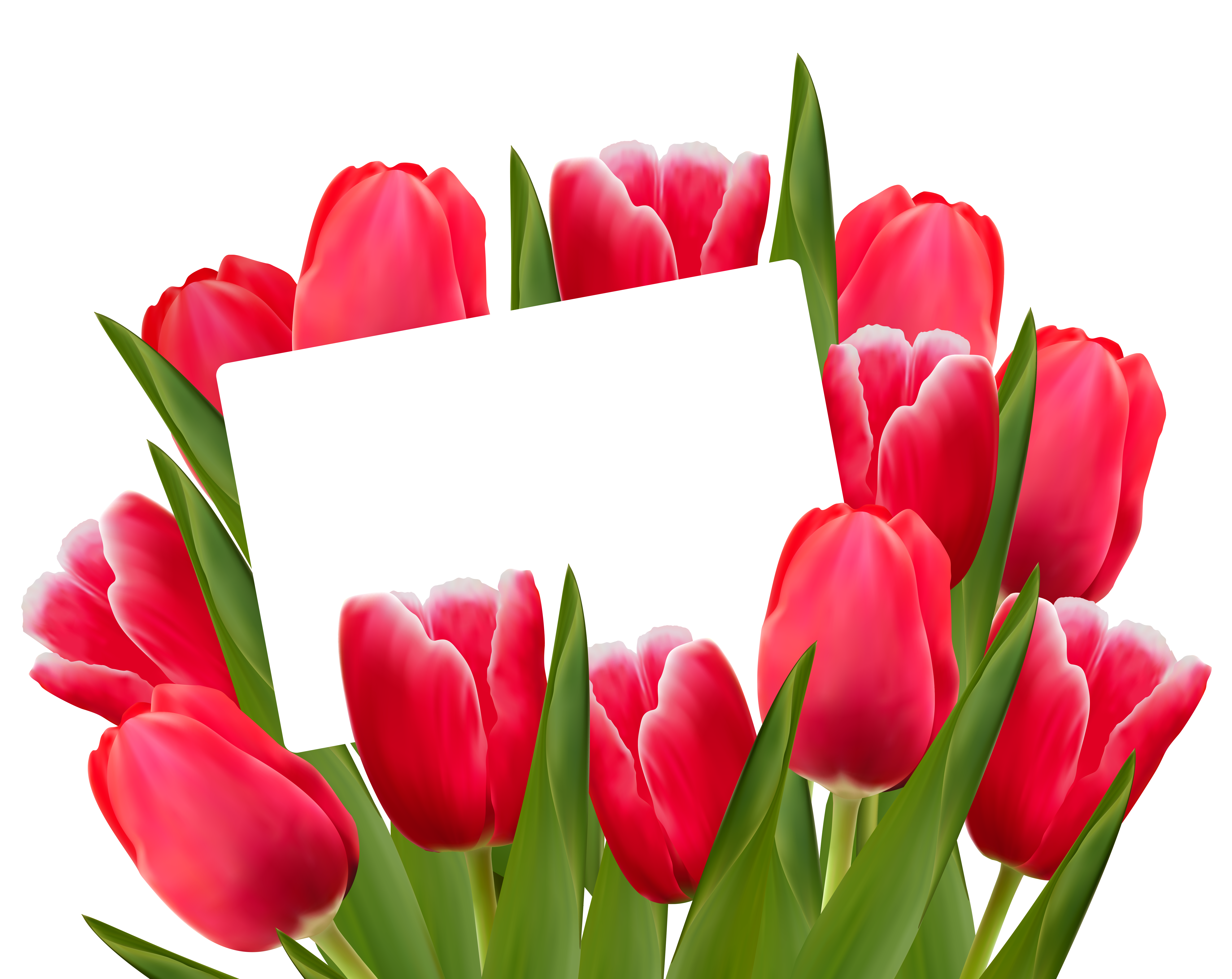 Frame clipart tulip  Red Decoration full View