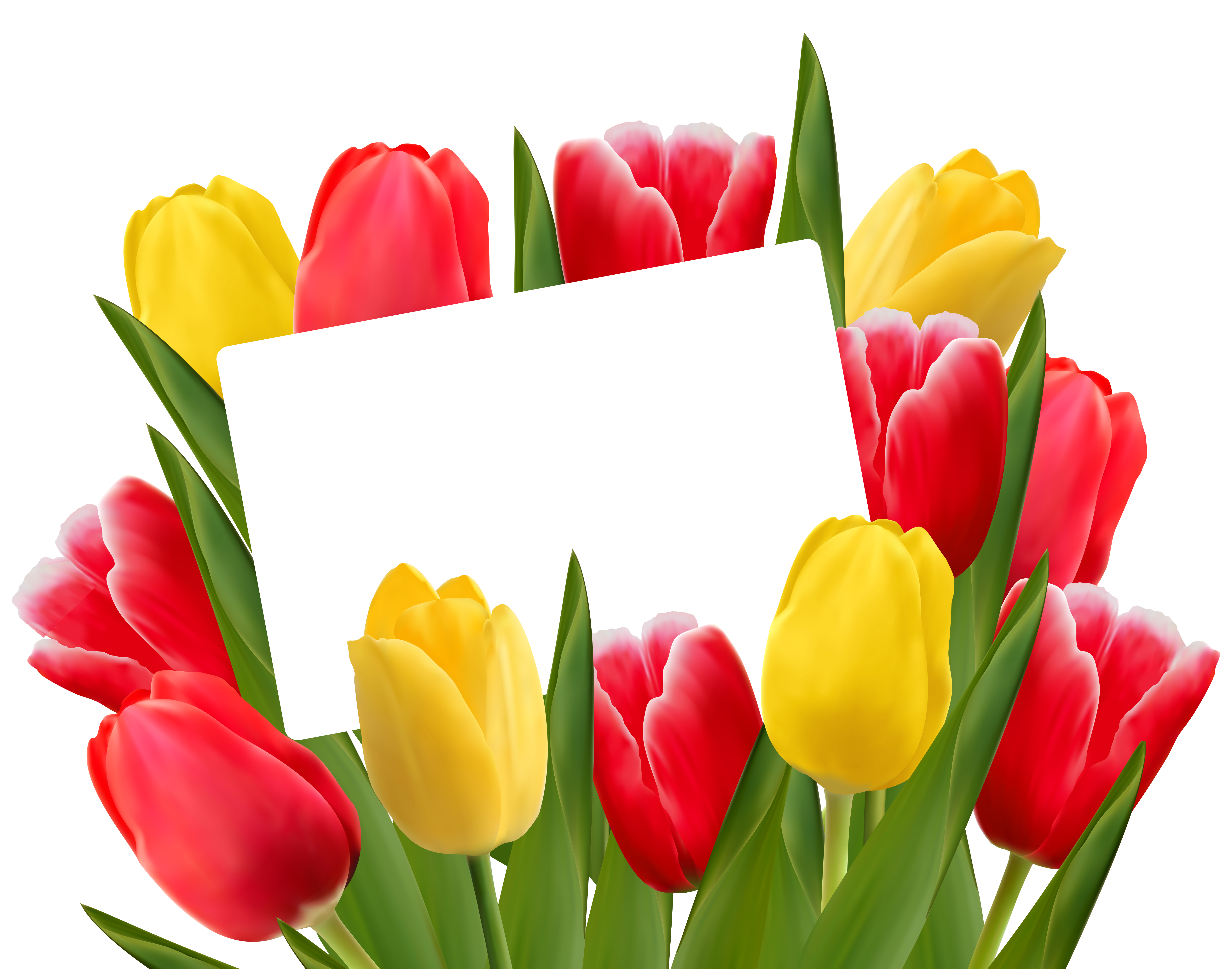 Frame clipart tulip Clipart Red Yellow full View
