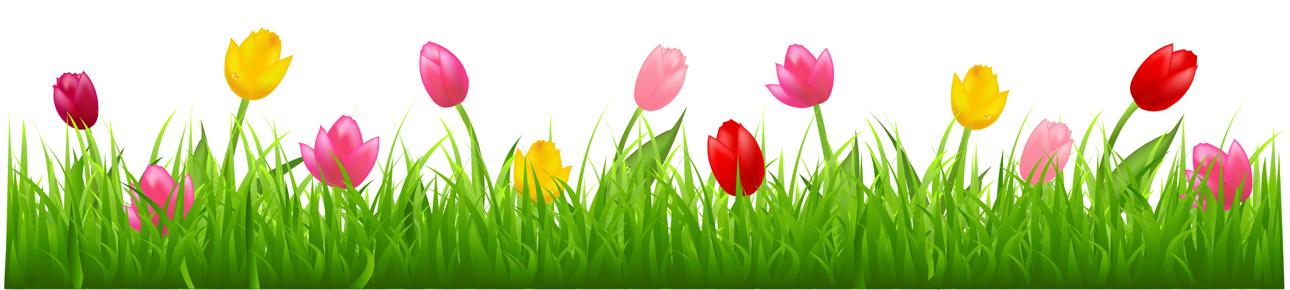 Frame clipart tulip Colorful Tulips PNG Colorful Grass