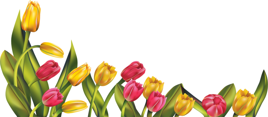 Frame clipart tulip More HanaBell1 Download Abstract by