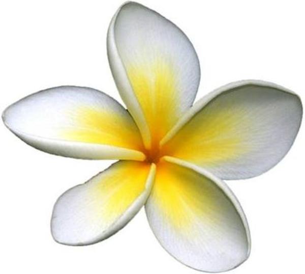 Frangipani clipart caribbean Download Clker com art Free