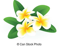 Frangipani clipart caribbean Plumeria Clip Art 1 Selfhome1/485;