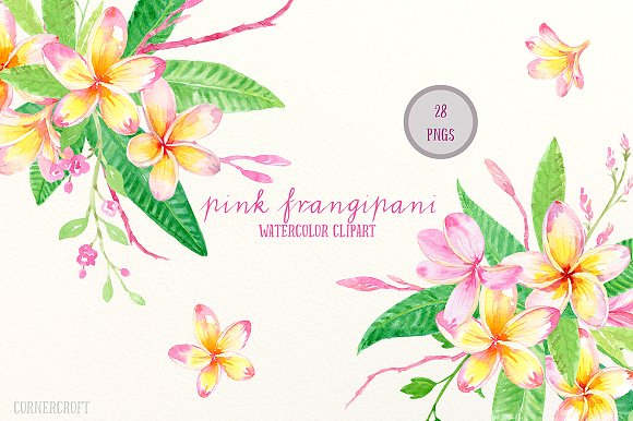 Frangipani clipart spa Pink Watercolor on Art Illustrations