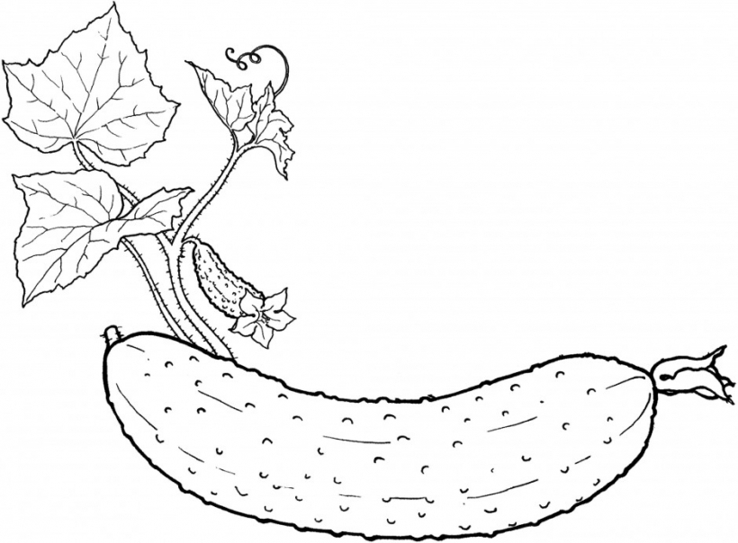Fruits & Vegetables clipart coloring page And az vegetables fruit pages