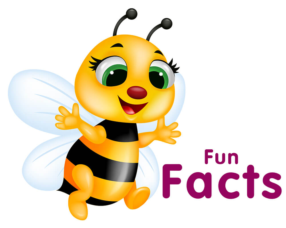 Knowledge clipart interesting fact About California Fun facts fun