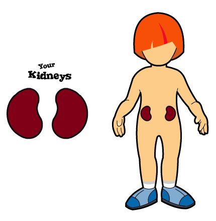 Moving clipart kidney Clipart IMGFLASH Fun Fun Kidney