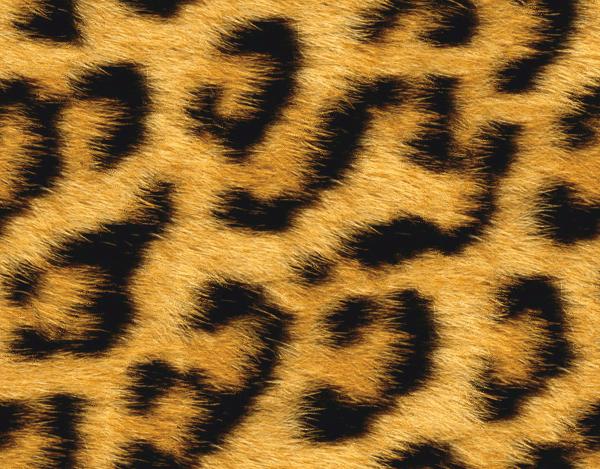 Fur clipart Clip Leopard Spots Art Fur