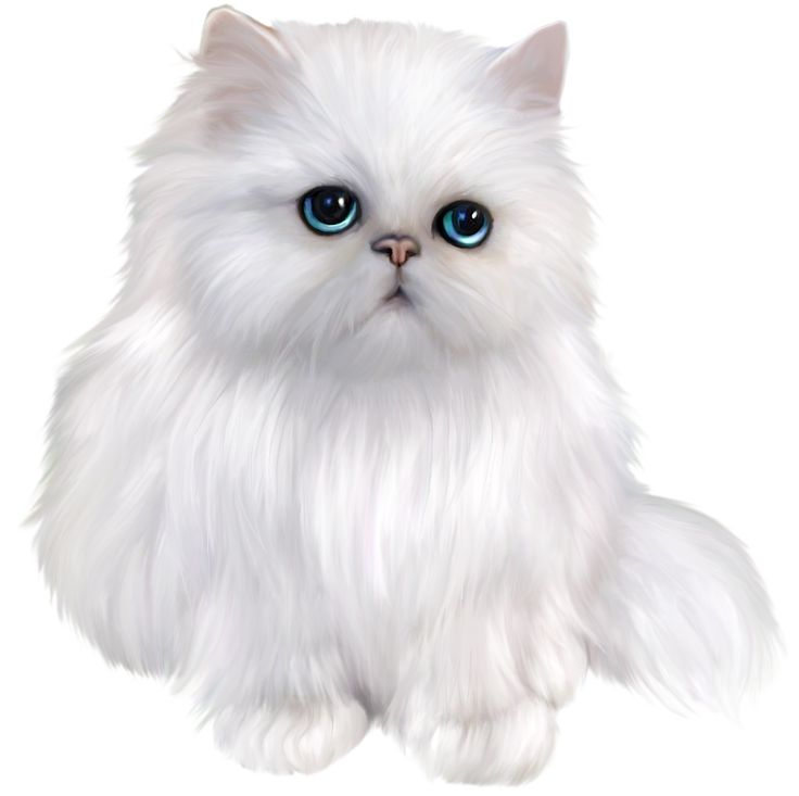 Furry clipart persian cat #5