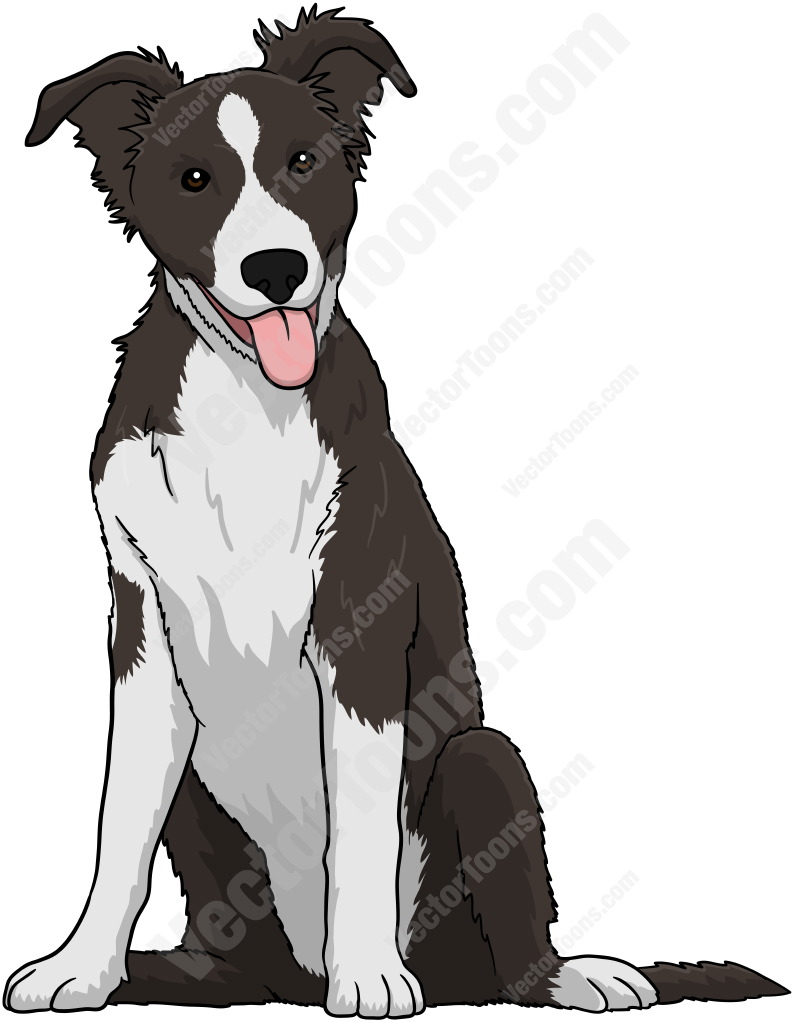 Border Collie clipart black and white #animal and White Collie And
