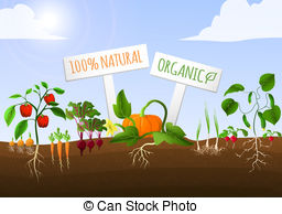 Background clipart vegetable garden #3