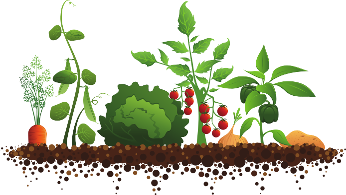 Background clipart vegetable garden #5