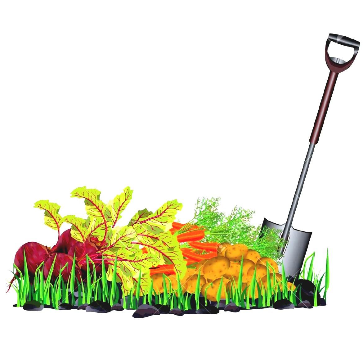 Background clipart vegetable garden #7